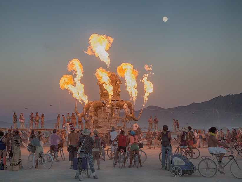 the-burning-man-site-is-infested-with-swarms-of-disgusting-bugs